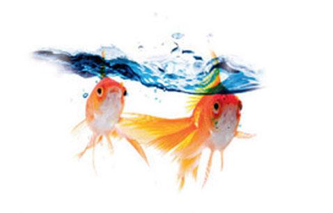 Peinture sp ciale pour salle de bain sans carrelage - Peinture speciale salle de bain ...