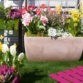 Les bulbes de tulipes, crocus, narcisses à planter pour avoir des fleurs au printemps