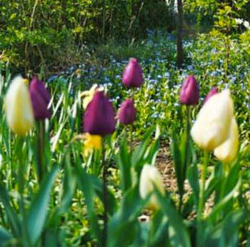Belle floraison de plantes vivaces et à bulbes pour un jardin naturel