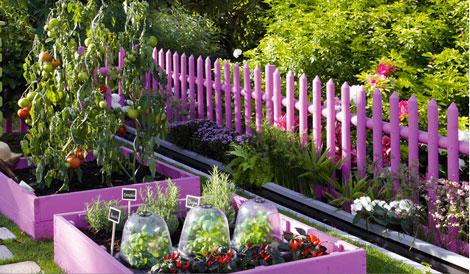 Un joli coin jardin composé de carrés potager peints en rose fushia pour la protection des bois qui donne aussi du tonus au potager le vert de la végétation en contraste
