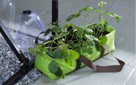 Jardinière sac souple en toile de couleur vert pour cultiver des fraise sur son balcon qui se déplace à volonté selon les caprices du soleil.