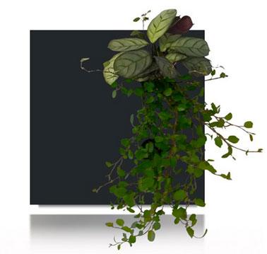 Cadre végétal composition en cascade à fixer au mur. Couleur du cadre noir.