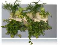 cadre-vegetal-mural-wallflower-fond-gris
