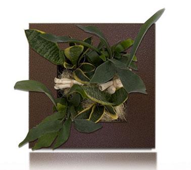 Tableau végétal référence Alaska disponible chez Wallflower à accrocher au mur. Cadre couleur marron martelé