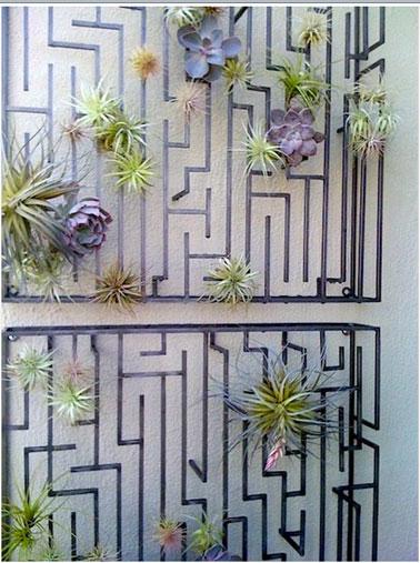 composition légère de plantes grasses Tillandsia sur mur balcon