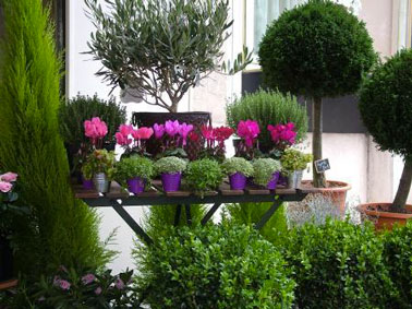 La d coration du jardin balcon terrasse pictures to pin on for Decoration jardin balcon