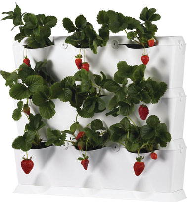 Mur v g tal mini jardin 9 cases for Mur vegetal exterieur balcon