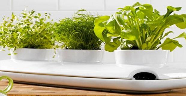 jardin tag re fleur plateau fleurs plantes d escalier pi destal pictures to pin on pinterest. Black Bedroom Furniture Sets. Home Design Ideas