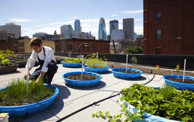 Faire un potager sur balcon en s'inspirant du concept de potager sur les toits de New York développé par Michelle Obama