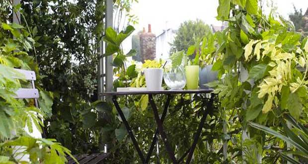 15 id es pour am nager un petit balcon avec jardin - Solution pour eloigner les chats du jardin ...