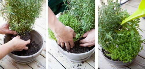 Placez ensuite la plante dans le nouveau pot, comblez par du terreau et tassez la terre