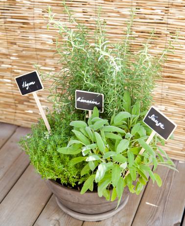 Comment planter des herbes aromatiques sur son balcon for Plantes aromatiques