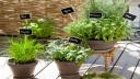tuto et conseils pour planter et cultiver des plantes aromatiques en pot sur un balcon