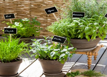 planter des plantes aromatiques sur son balcon diy d co cool. Black Bedroom Furniture Sets. Home Design Ideas