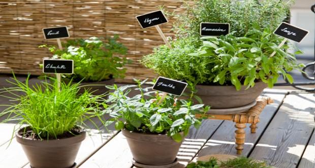 planter des plantes aromatiques sur son balcon diy d co cool. Black Bedroom Furniture Sets. Home Design Ideas