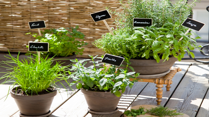 planter des herbes aromatiques en pot sur un balcon. Black Bedroom Furniture Sets. Home Design Ideas