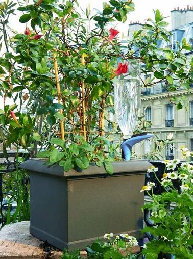 Pas encore sorti par la marque Parrot, l'arroseur H2O se présente comme le digne successeur du Flower Power. Disposant d'une batterie de capteurs permettant d'appréhender les besoins de la plante, ce système permet aussi d'y adapter une bouteille d'eau afin d'automatiser l'arrosage.