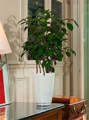 Le Parrot Pot 2 est la solution ultime aux problèmes d'arrosage. Doté d'une réserve d'eau de 2,2 litres, ce pot design blanc simple distribue l'eau en fonction des besoins de la plante et de la commande qui est faite. Ainsi via une simple application pour smartphone vous pourrez, à distance, contrôler l'arrosage de votre plante afin d'éviter qu'elle ne se dessèche. Fini les mauvaises surprises de retour de vacances, vos plantes seront toujours aussi pimpantes que quand vous les avez laissées !