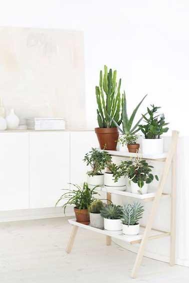 Des plantes en pot posées sur une étagères escabeau, une idée déco à retenir pour apporter de la couleur dans une cuisine blanche sans encombrer le plan de travail.