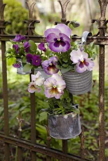 Les pensées sont les fleurs d'automne les plus présentes sur les balcons. Elles s'entretiennent facilement.