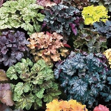34 plante pour amenagement balcon fleuri en automne - Plantes pour balcons ...