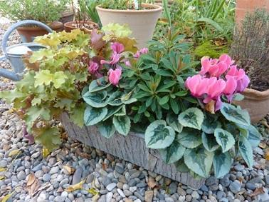 Une composition automnale de variétés de plantes balcon, une excellente idée pour décorer son petit extérieur même en hiver.