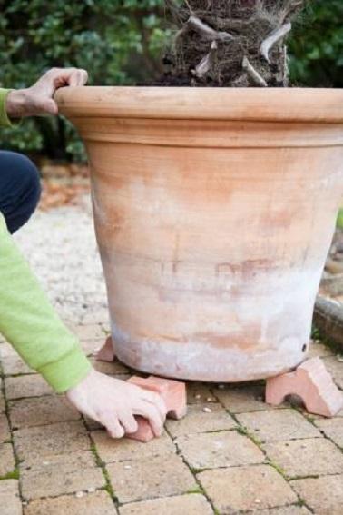 Pour commencer, on surélève le pot avec quatre cales pour éviter à l'eau d'arrosage de stagner, de geler et donc de fragiliser les racines du palmier.