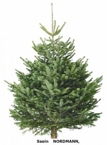 Pour acheter son sapin de Noël Nordman chez Ikea Précommande en ligne à retireren magasin à partir du 28 novembre 2015. Hauteur : 140 cm, Prix 24,99 € avec carte cadeau de 20€ offerte
