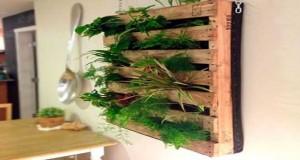 Unmur végétal fait avec une palette, un aménagement déco balcon gain de place. Avec une palette, faire un potager sur lebalcon, installer des plantes sur un mur devient possible.