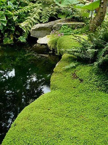 Jardin japonais quelles plantes et arbres pour un jardin - Couvre sol jardin japonais ...