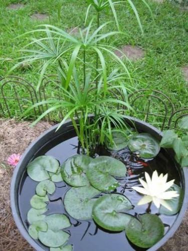 un bassin ou une fontaine de jardin zen avec des plantes. Black Bedroom Furniture Sets. Home Design Ideas