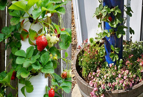diy un jardin suspendu pour planter des fraises en hauteur. Black Bedroom Furniture Sets. Home Design Ideas