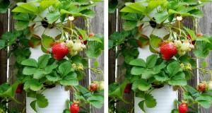 Un DIY ultra simple et rapide à faire pour fabriquer un joli jardin suspendu pour les fraises ! Une déco de jardin originale pour un extérieur tendance à réaliser pile-poil pour l'arrivée des beaux jours