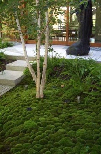 un jardin zen recouvert d un tapis de mousse. Black Bedroom Furniture Sets. Home Design Ideas