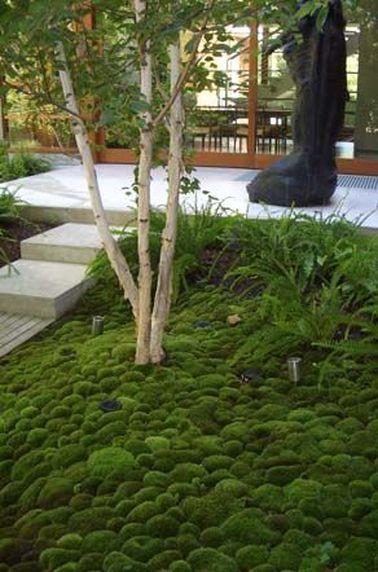 La beauté du jardin zen réside aussi dans ses sols épurés. Recouverts de gravier ou de mousse, ils ont toujours un air net et bien tenu !