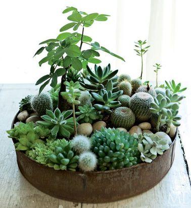 Mélangez succulentes et cactus pour un adorable jardin d'intérieur qui demande peu d'entretien. Vous devrez juste le déplacer ponctuellement pour répondre aux besoins en lumière de vos plantes grasses.