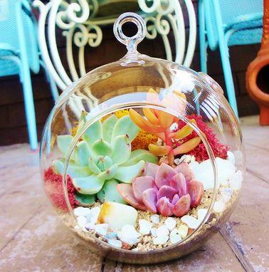 La succulente s'adapte bien dans de petites compositions telles que ce terrarium qui demande peu d'entretien et un arrosage uniquement pendant la saison chaude.