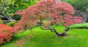Jardin japonais quelles plantes et arbres pour un jardin for Arbre feuillage persistant pour petit jardin