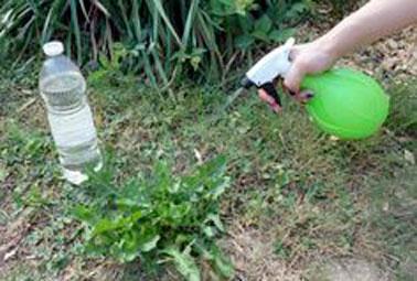 Glyphosate : des alternatives bio pour désherber au naturel  Application-du-desherbant-naturel-sur-les-mauvaises-herbes