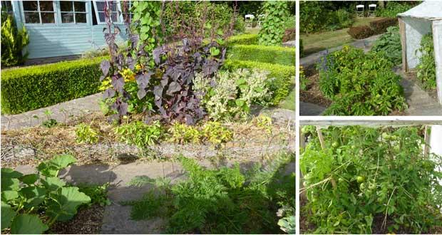 Arrosage goutte goutte astucieux faire pour le potager for Arrosage du jardin