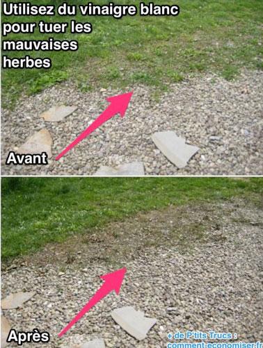 diffrence entre avant et aprs lapplication du dsherbant naturel sur les herbes de l - Comment Faire Du Desherbant Avec Du Vinaigre Blanc