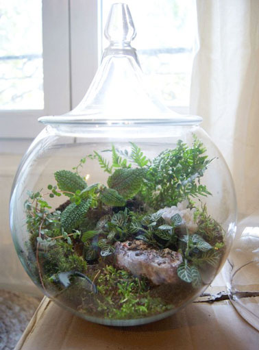 terrarium pour plantes fashion designs quelles plantes pour un terrarium. Black Bedroom Furniture Sets. Home Design Ideas