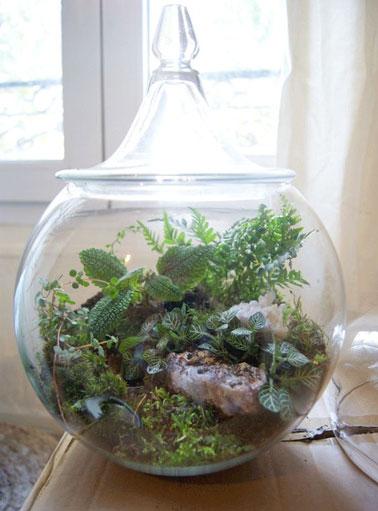 Un terrarium en bocal l gant avec couvercle for Top deco tout pour la maison
