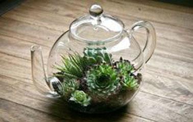 Un terrarium réalisé dans une théière en verre, avec un jardin composé de plusieurs plantes, de gravier, de terre, plutôt original et sympa, comme touche nature de déco intérieure.