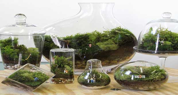 un terrarium la touche d co pour les plantes dans la maison. Black Bedroom Furniture Sets. Home Design Ideas