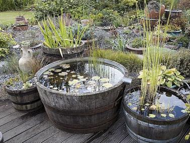 Un bassin dans un tonneau en d co de jardin - Idee de jardin pas cher ...