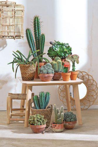Différentes formes et tailles de cactus naturels aux charmes variés particulièrement décoratifs.