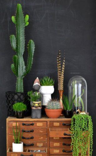 Cactus naturels dans des pots en terre cuite, des vases en céramique et sous une cloche en verre