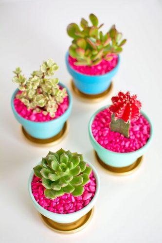 Mini cactus artificiels avec granules roses, dans un salon par exemple