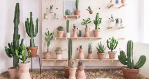 Découvrez aujourd'hui l'utilisation des cactus (sous toutes ses formes: naturels, en cadre photo, en feutrine, en papier peint, ...) en déco intérieure